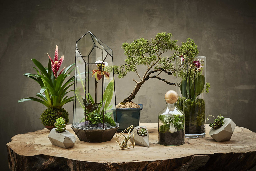 Terrariums-2-108-WEB.jpg