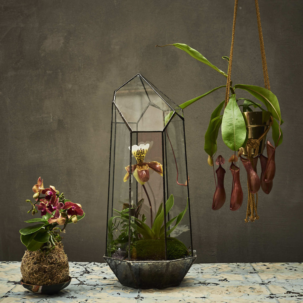 Terrariums-4-026-WEB.jpg