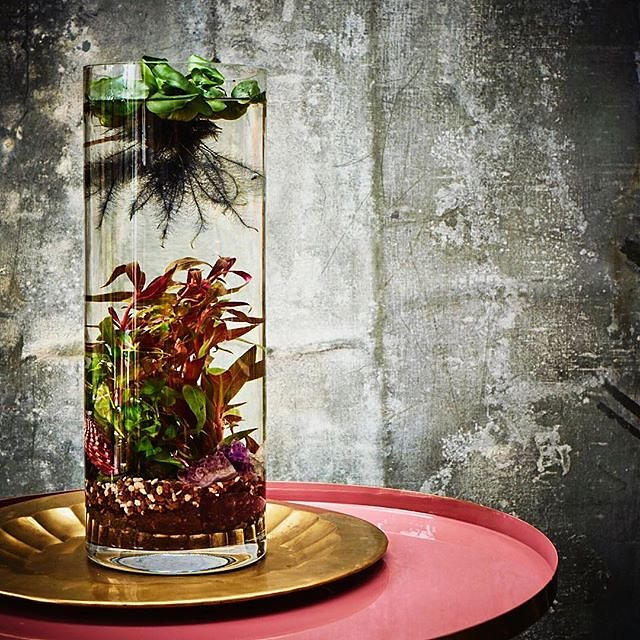 Definitely going to have a go at making this mesmerising aquatic jarrarium @alysonmowat Terrariums & Kokedama #jarrarium #waterhyacinth #alysonmowat .