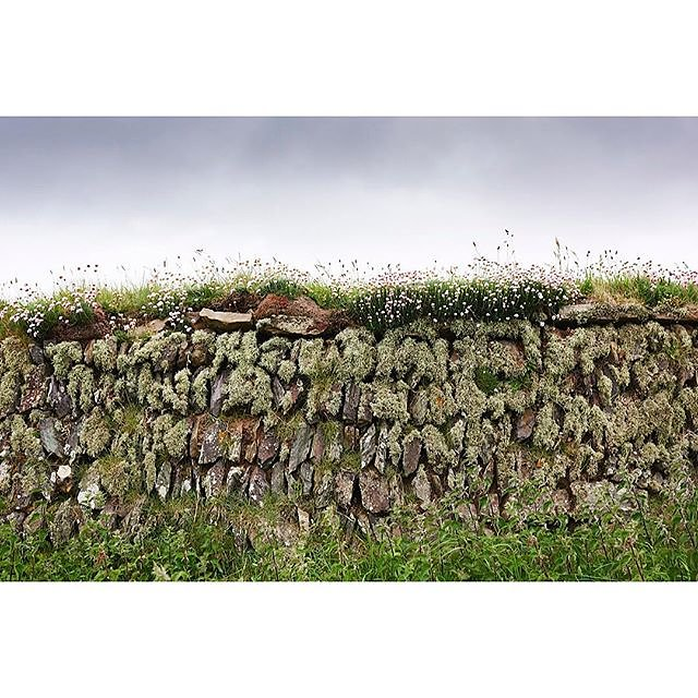 My daughter was laughing at my endless photographing of this drystone wall on our walk yesterday......