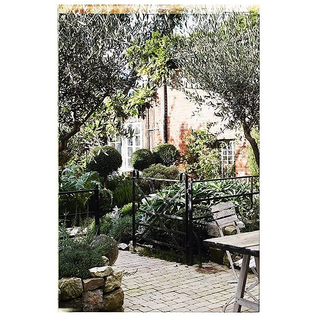 Provençal planting in the courtyard garden @branchingoutantiques ..... featured in October issue of @countrylivingmag Styled by Hester Page
